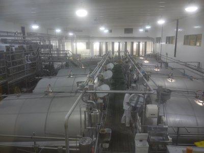 Dairy Fair