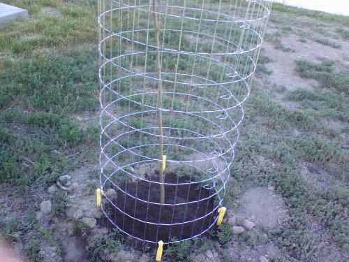 Plum Stick Cage