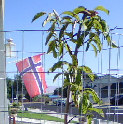 Plum Stick with Norwegian Flag
