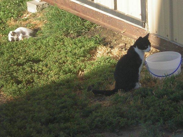 SC1 and Kitten