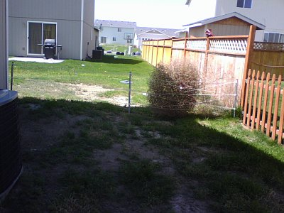Temp Fence Catches Tumbleweed