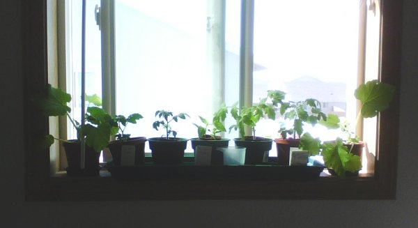 All the Plants on the Windowsill